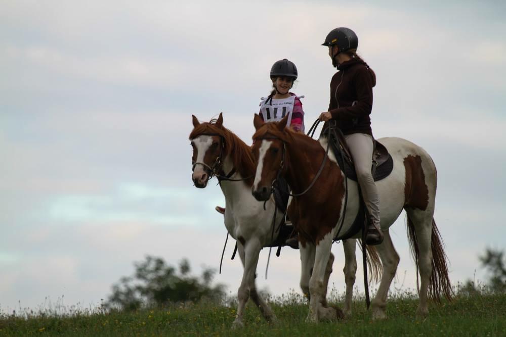 Weitere Pferde